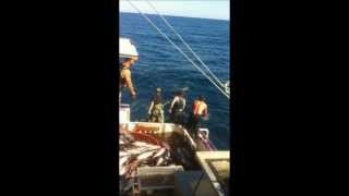 Jason Morris Tuna Fishing (Stillwater)