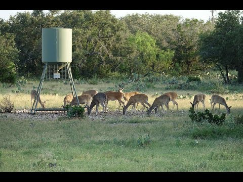 540 Acre South Texas Hunting Ranch