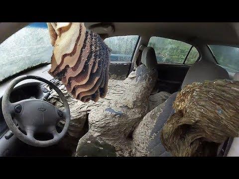 WASP NEST VS CAR - Huge Wasp Nests