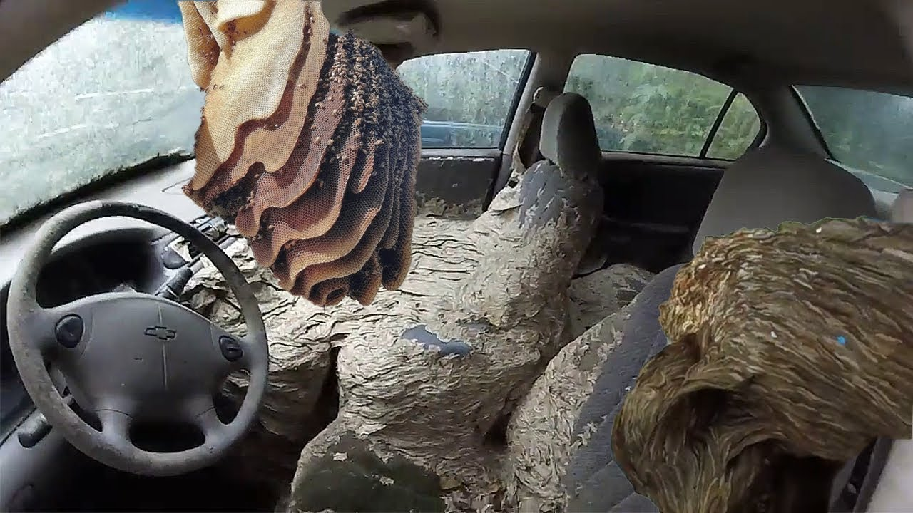 WASP NEST VS CAR - Huge wasp nests