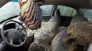 WASP NEST VS CAR  Huge wasp nests
