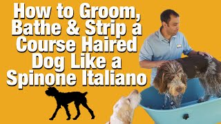 Dog Grooming, Stripping and Bathing a Spinone Italiano How To