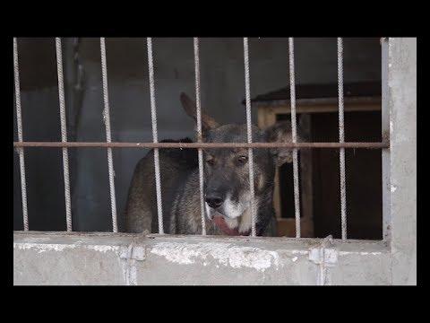 Телеканал ІНТБ: Як доглядають за чотирилапими в центрі стерилізації безпритульних собак у Дичкові