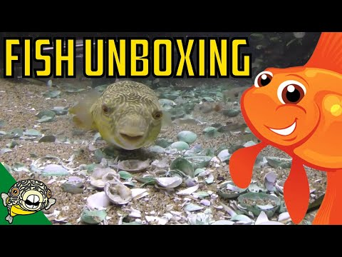 Aquarium Fish Unboxing. Rare Plecos, Puffer Fish, Corydoras, Cardinal Tetras, Rice Fish