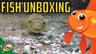 aquarium fish unboxing rare plecos puffer fish corydoras cardinal tetras rice fish