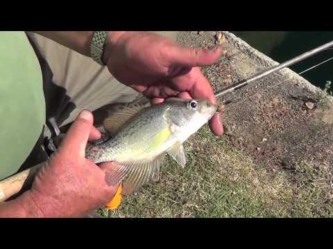FISHING IN RIVERLAKE BAKERSFIELD