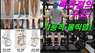 족관절의 구조! 기능적 움직임! 발목통증,무릎통증,고관…