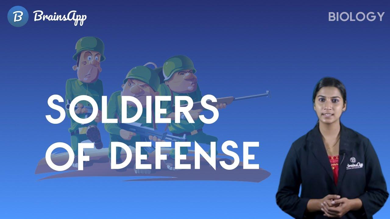 Soldiers of Defense - Biology SSLC Class 10 Kerala Syllabus   BrainsApp  Learning App