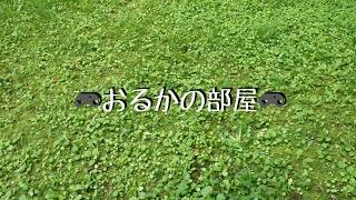 [仁王]おるか#新ミッションやる! thumbnail