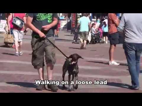 Molly – German Shorthaired Pointer – 10 Day Dog Boot Camp at Adolescent Dogs UK