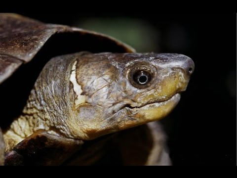 Poaching, Illegal Wildlife Trade and the Philippine Turtle C