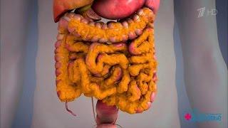Здоровье  Персонифицированная медицина  Висцеральный жир (18 06 2017)