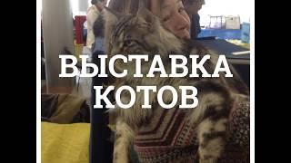 Выставка котов - Харьков