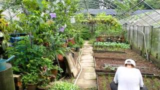 Organic Farming in Singapore.  Video 5 of 10.