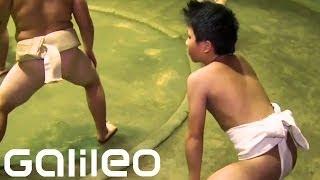Sumo - Kinder   Galileo