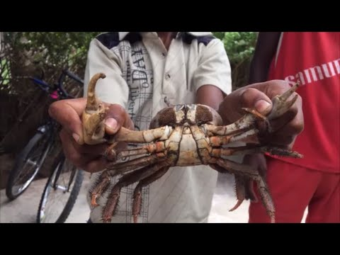 how to cook crab traditional chinese way