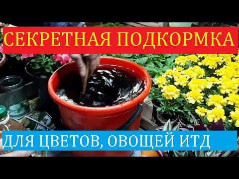 Вопрос: В летних подкормках цветов что должно преобладать?