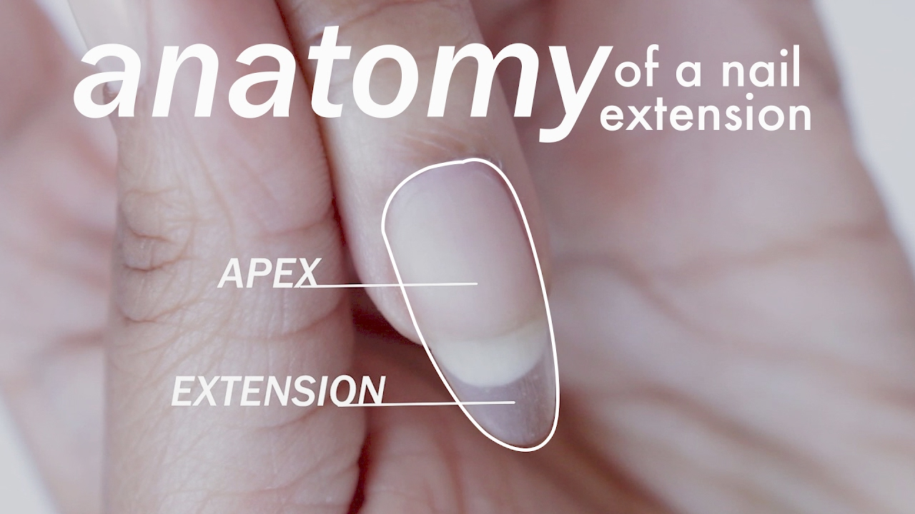 Anatomy Of A Gel Extension For Beginners Abetweene Youtube