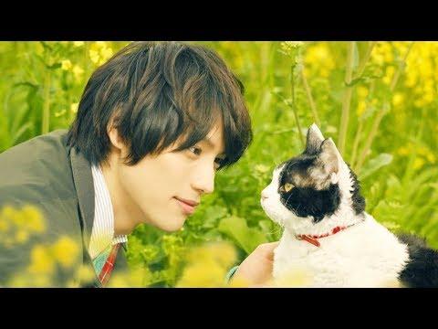 The Travelling Cat Chronicles - Official Trailer [ ตัวอย่าง ซับไทย ] - วันที่ 12 Oct 2018