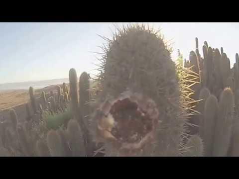 Cactus Walk Youtube