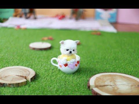 Teacup puppy! Princess Maltese ~ Dog Video
