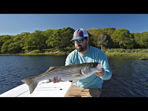 Buzzards Bay Backwater Stripers