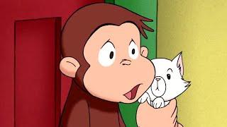 George O Curioso 🐵Febre para Macaco 🐵Episódio Completo 🐵O Macaco🐵Desenhos Animados