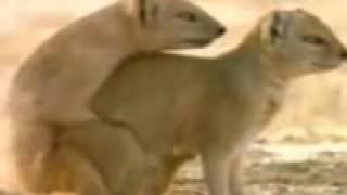 YouTube   سكس حيوانات ـ 2009