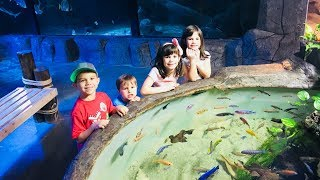 Kids Drive Parents Car to Town to the Aquarium and Pet Sting Rays and Sharks! Just For Fun!