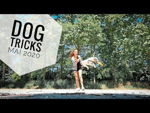 Dog Tricks    Mai 2020
