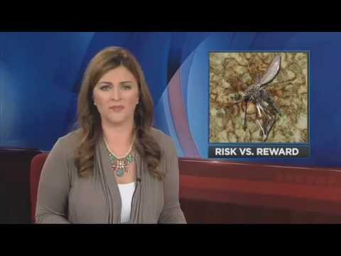ETMC in the news Should pregnant women use mosquito repellent