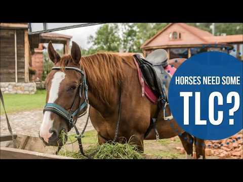 SALE: Horse Feed Buckets & Supplies | Fortex/Fortiflex Flat Back Bucket | Equine Feeders