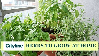 Top 5 herbs to grow in your own home