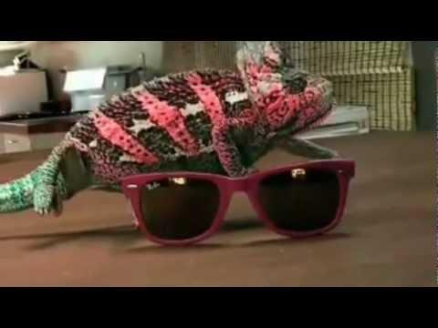Awesome Camouflage Chameleon