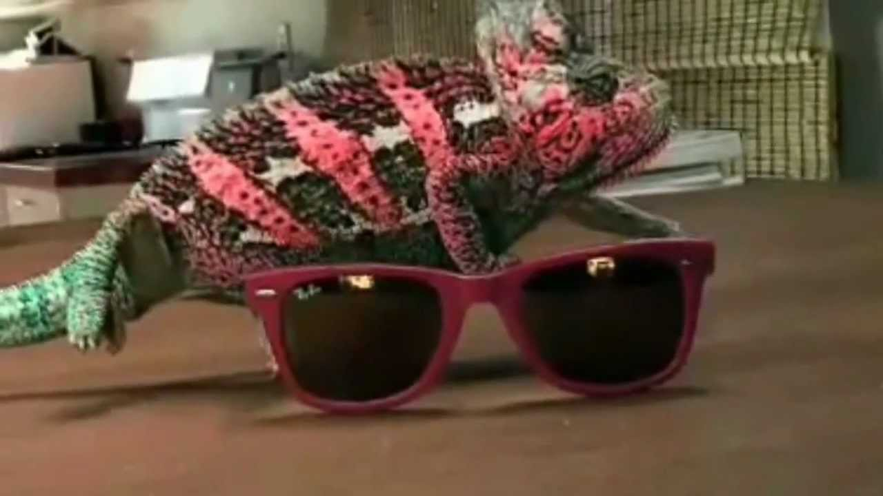 c4a6a4db333 Awesome Camouflage Chameleon - YouTube