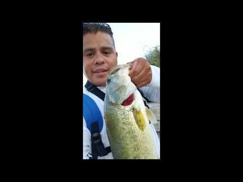 Huge Bass Near Ft Worth Hidden Waterfalls