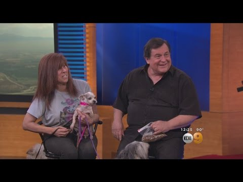 'Batman' Actor Burt Ward A Real-Life Hero To 4-Legged Friends