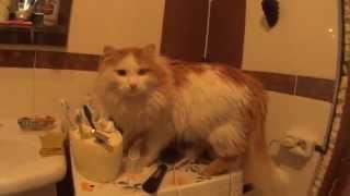 Cat Смешной кот. Рыжик чистит зубы.