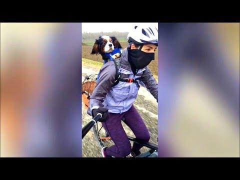 Dog on bike | Cavalier King Charles Spaniel
