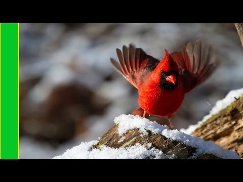 The 10 most beautiful birds of the World - you will not believe!