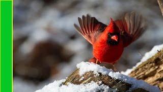 Las 10 Aves mas Hermosas del Mundo -  No lo podrs creer