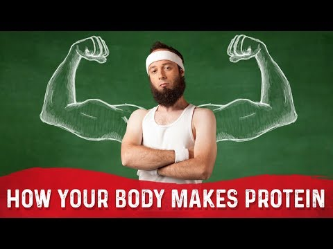 how-does-your-body-make-proteins-(like-muscle)?