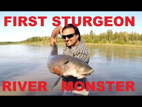 North Saskatchewan River Sturgeon Fishing With Deeper Sonar