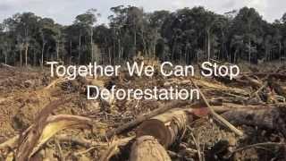 Anti-deforestation Campaign in Jakarta