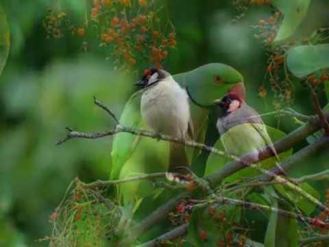 beautifull birds - 10 rare and super beautifull birds
