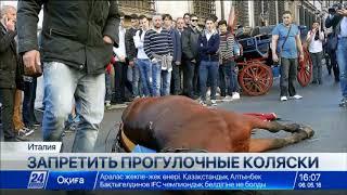Защитники животных требуют запретить конные коляски в Риме