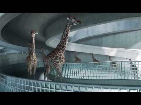 Thumbnail: High Diving Giraffes
