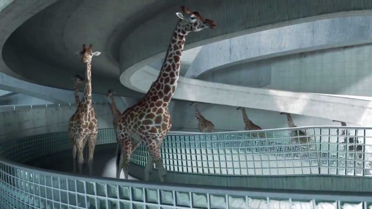 Giraffes Platform Dive Into Olympic Pool