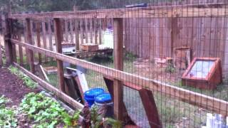 Organic Garden - 008 - Deer Fence For Climbing Plants