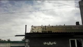 Голуби Крыма 2  2016(, 2016-05-26T11:21:05.000Z)